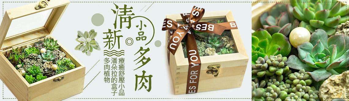 潘朵拉的盒子多肉植物