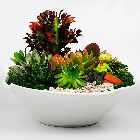 多肉植物哪裡買 肉迷最愛多肉植物