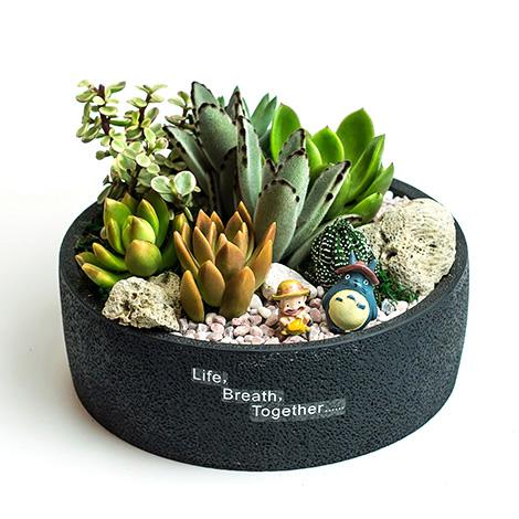 有禮真好推薦 辦公室舒壓多肉植物創意盆栽