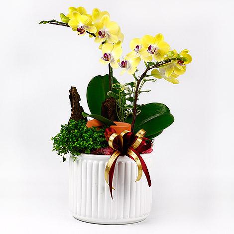 禮物送什麼好 蘭花盆栽 花店訂花全省配送