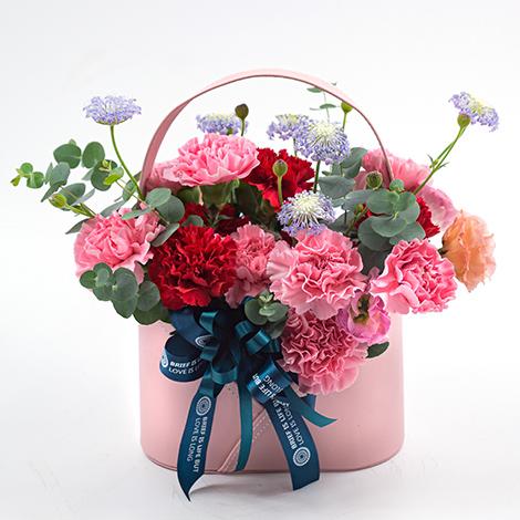 母親節禮物 康乃馨盆花