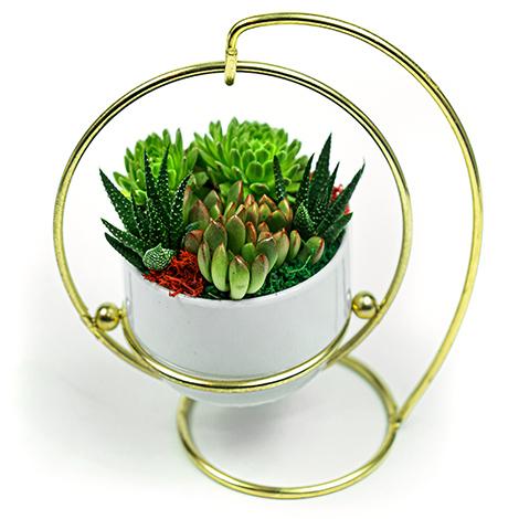 台北花店推薦 美式風多肉植物 小品盆栽