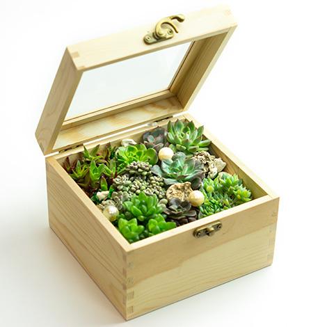 潘朵拉的盒子多肉植物 居家佈置送禮首選